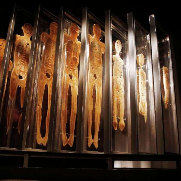 A view inside: Bodies The Exhibition