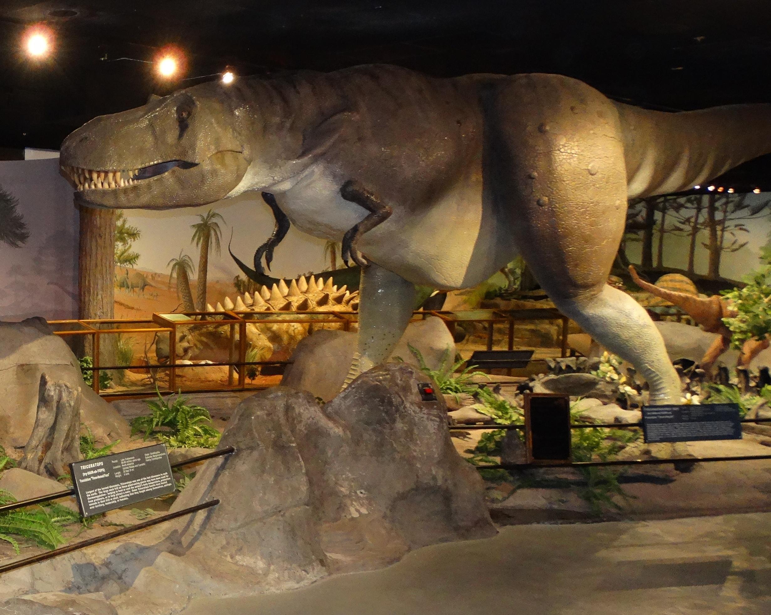 Nevada Natural History Museum